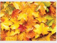 * 309-930, Fall Leaves Combo Kit (includes 309-200 &
