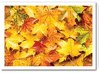 * 309-200 PLACEMAT Fall Leaves 1m/cs