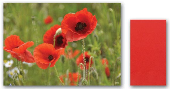 * 309-926, Remembrance Day Combo Kit, Placemats and